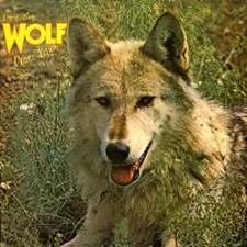Darryl Way's Wolf – Canis Lupus